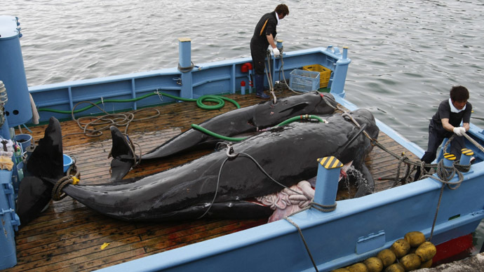 ​Japan to resume whale hunt in Antarctic this year