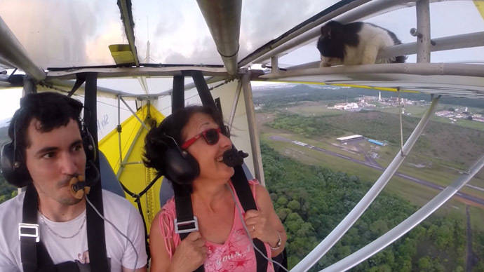 Cat takes extreme flight on plane wing - and survives! (VIDEO)