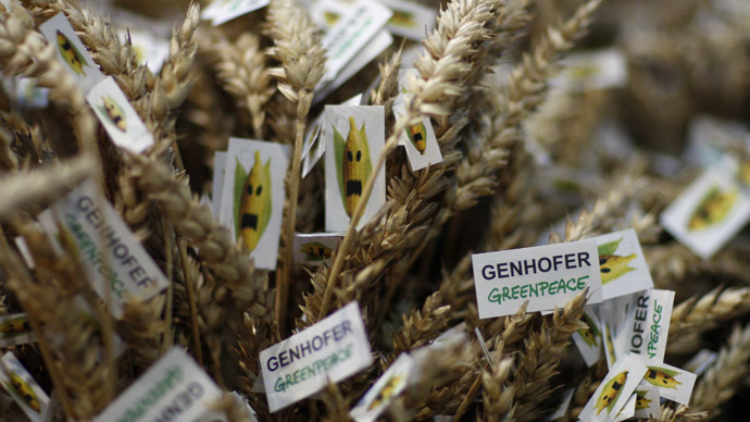 GM wheat crop fails to repel bugs, £3m trial branded 'a waste'