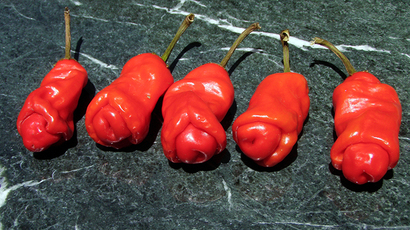Penis peppers: Erotically-shaped fruit, veggie 'rude seeds' grip Barcelona
