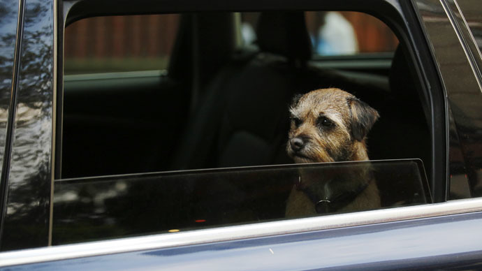 Tennessee legalizes breaking into cars to save pets