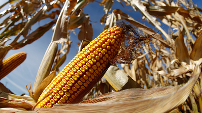 Corn-ered: America's native crop almost impossible to avoid at supermarket