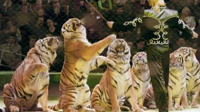 Edgar Zapashny and his tigers (RIA Novosti / Dmitry Korobeynikov)