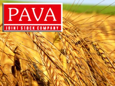 Pava posts FY 2008 Net Profit of 22.7 million Roubles