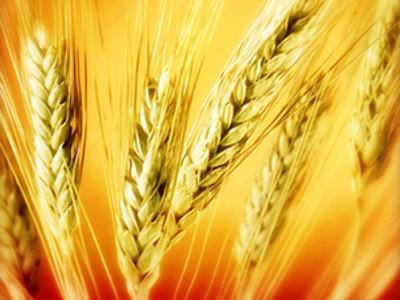 Russia bans grain exports