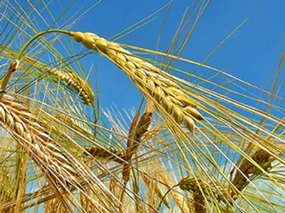 Russia to expand on global grain market
