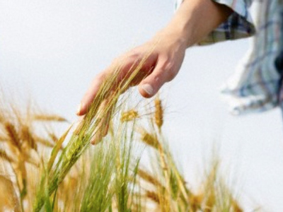 Russia extends grain export ban