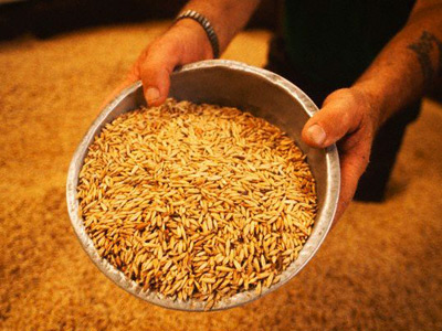 Russia expands grain market intervention