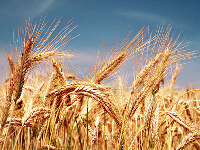Poor infrastructure holds Russia´s prospective grain sectror