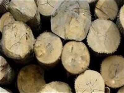 Russian timber business to branch out