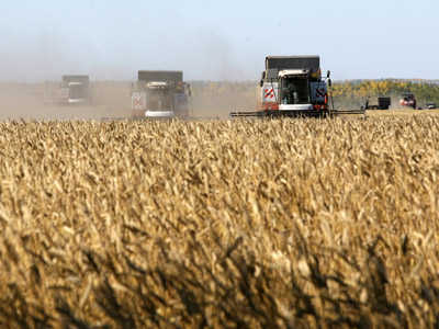 Russian wheat price reaches historic highs