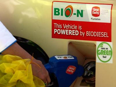 World must rethink biofuel policies to avoid food crises: U.N.