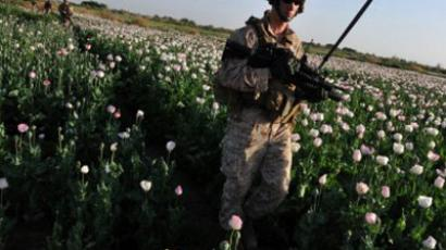 US Marine walks through opium poppy field at Maranjan village in Helmand province  (AFP Photo / Bay Ismoyo)