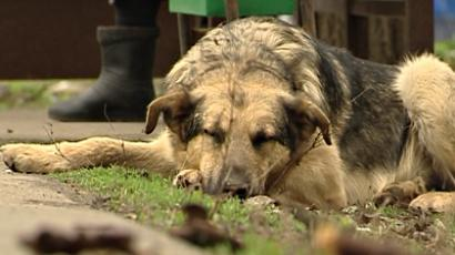 Ukraine's stray dogs cremated in street clean-up
