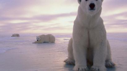 Polar bear is the symbol of Svalbard