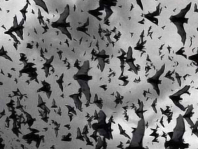 Depressed bats rain on Ukrainian city