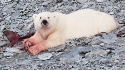 Polar bear mauls scientist to death