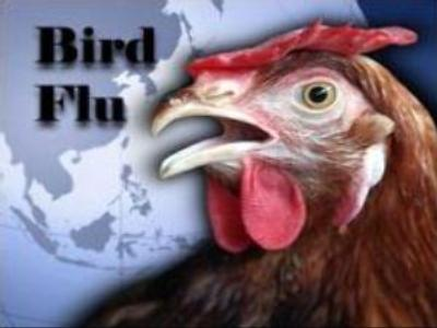 Bird flu death toll in Indonesia rises to 74