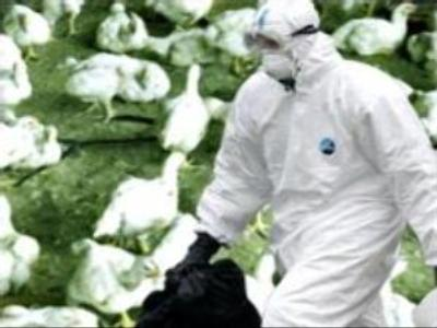 Bird flu over in Moscow region