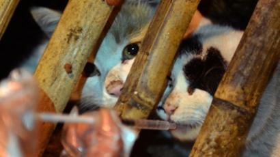 This picture taken on January 15, 2013 shows a volunteers feeding caged cats after the truck that was transporting more than 600 cats was involved in an accident in Changsha, central China's Hunan province. (AFP Photo/China Out)