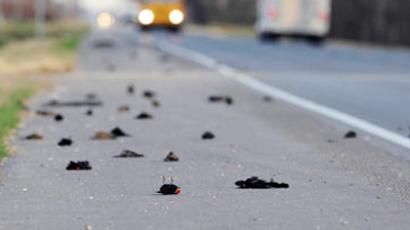 Bye-bye blackbirds: Feathered fatalities forewarn Doomsday?
