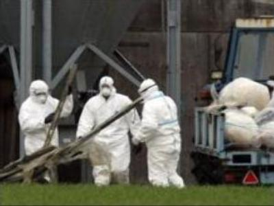 Deadly strain of avian flu confirmed in 3 more Moscow region districts