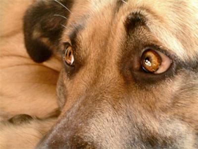 'Dog maniac' arrested in Moscow
