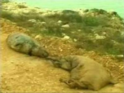 Ecologists mystified by seal deaths