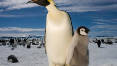 As a film maker, Olga Stefanova likes the penguins and seals, but for her Antarctica is about something much greater.
