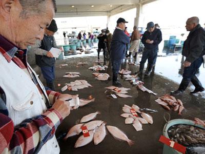 Fukushima fish contamination raises fears of ongoing radiation leak