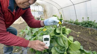 Farmer checks radiation at his cucumber farm at Nihonmatsu city in Fukushima prefecture, 50km west of stricken nuclear power plant (AFP Photo / Yoshikazu Tsuno)