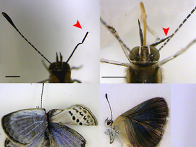 Fukushima mutant butterflies spark fear of effect on humans