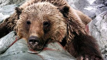 Russia gets tough on poachers