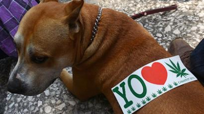 A sticker is seen on a dog's back during a demo in support of the legalization of marijuana, in Mexico City, on May 5, 2012 (AFP Photo/Yuri Cortez)