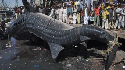 Residents gather as a whale shark is pulled from the water by cranes after it was found dead at Karachi's fish harbor February 7, 2012 (REUTERS / Akhtar Soomro)