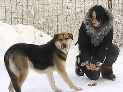"The ""Yakutian Hachiko has rejected a New Year gift of a warm kennel to protect him from Yakutia's biting cold. ("" RIA Novosti)"