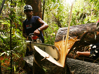 A villager illegally cuts down a tree in a forest in the North Kolaka district of Indonesia's South Sulawesi province (Reuters/Yusuf Ahmad)