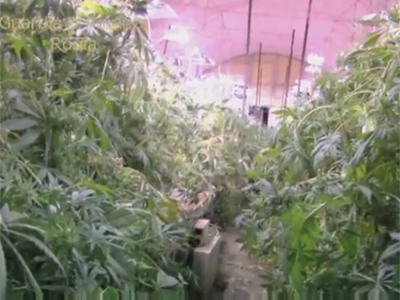 Pot palace: Cops seize 340kg of marijuana in abandoned Rome subway tunnel