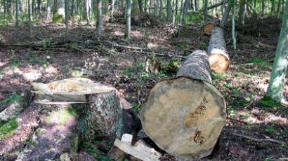 Illegal logging is thriving all across Russia