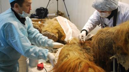 Mammoth find: Preserved Ice Age giant found with flowing blood in Siberia