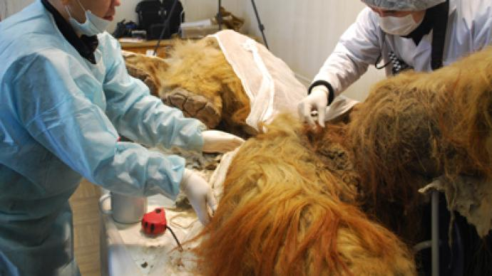 a discussion on the preservation of the remains of the mammoth Khudi recognized that lyuba was a mammoth carcass and that it was an important find however, they found that lyuba's remains had disappeared.