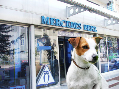 Jack Russell Terrier, well-known after the famous comedy film The Mask, ate the rat poison,strewn all over the Mercedes Benz office.