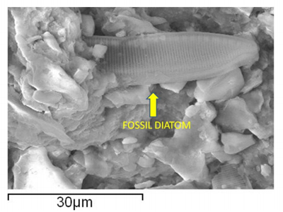 An example of a supposedly fossilized diatom (Image from www.journalofcosmology.com)