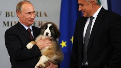Putin holds a Bulgarian shepherd dog he received from Boyko Borisov (R), AFP Photo / Nikolay Doychinov