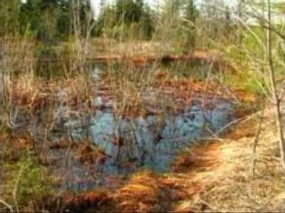 OIl spill contaminates Sakhalin river