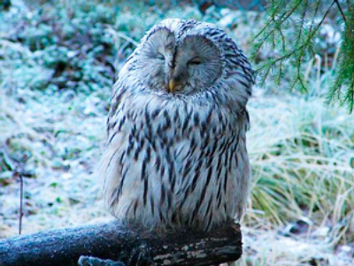Owls' aviary torched in Moscow