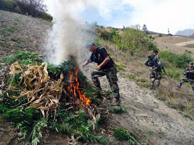 $15 million up in smoke: Peruvian police burn record 50 tons of marijuana (PHOTOS)