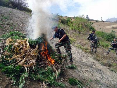 $15 million up in smoke: Peruvian police burn record 50 tons of marijuana (PHOTOS)
