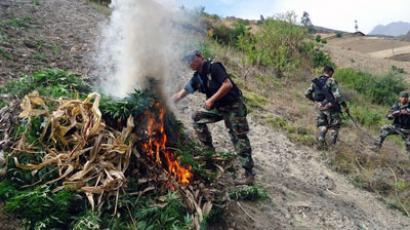Peruvian National Police showing the burning of marijuana plants in an undefined location in a region north of Lima.(AFP Photo / Mininter)
