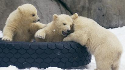 Polar bear triplets in the Moscow Zoo (RIA Novosti / Ramil Sitdikov)